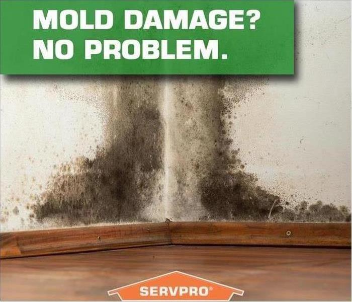 Mold Remediation Does Your South Arlington Home Have A Mold Problem